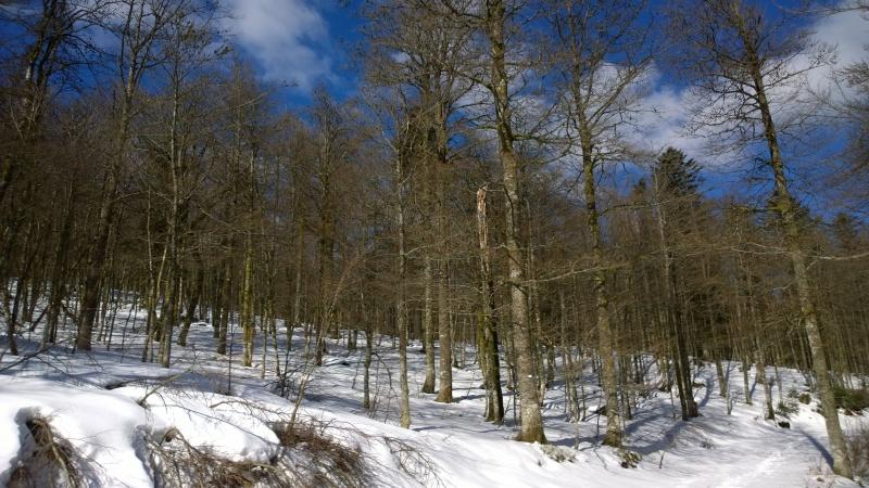 Week-end tourbières dans les Vosges 902354WP20150406103900Pro