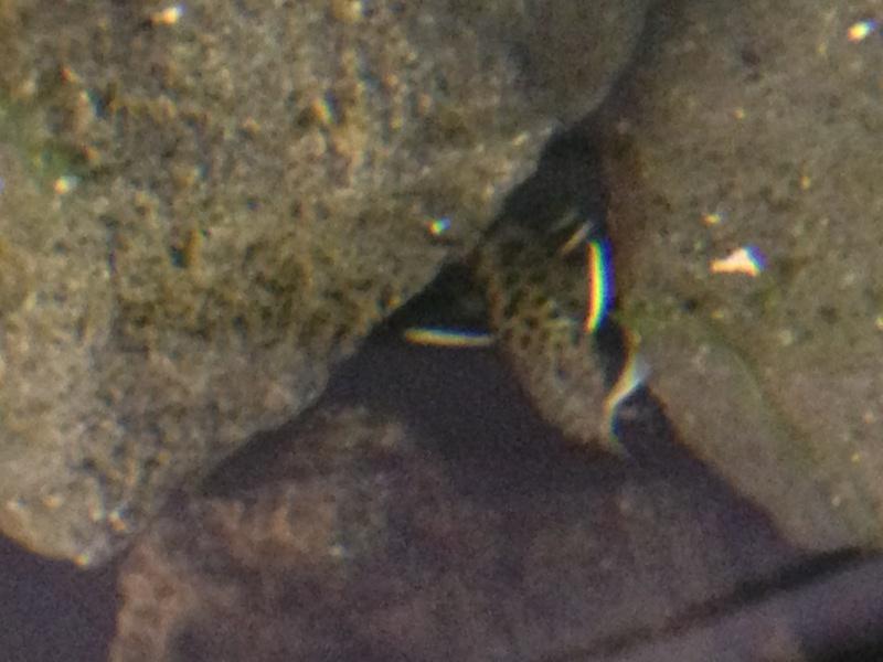 Identification d'un poisson 909126IMG1376