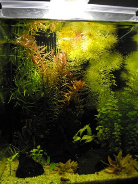 mes aquariums 910176DSCF6181
