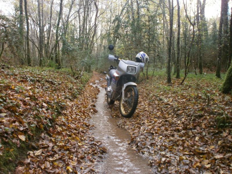 Promenade dans les bois 915809PA270005
