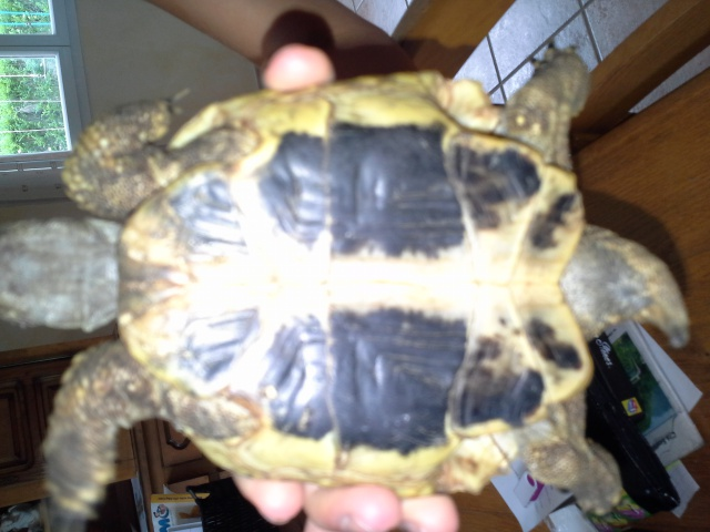 Identification de tortue terra 916308201407051211201