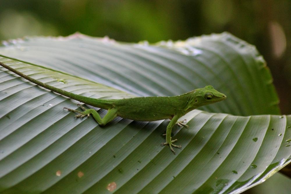 15 jours dans la jungle du Costa Rica 917416ano1r
