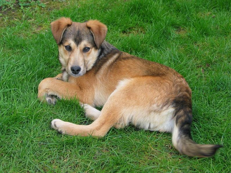 Chippy, chiot male, 3 mois, trouve sur le champ  917667IMG8108