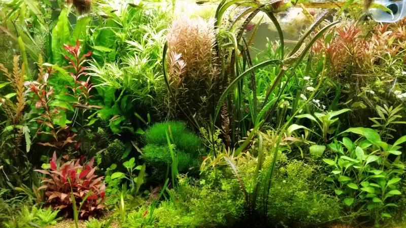 Mes (plus) de 60 plantes dans mon 240 litres - Page 6 92269820141221082537