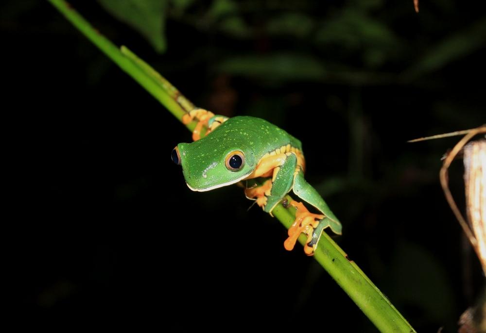 15 jours dans la jungle du Costa Rica - Page 2 922856calca3r