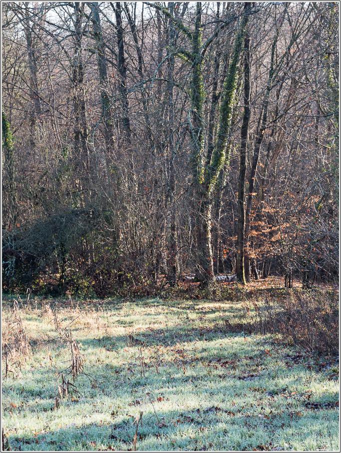 Pâle hiver 924440LR6P1290012