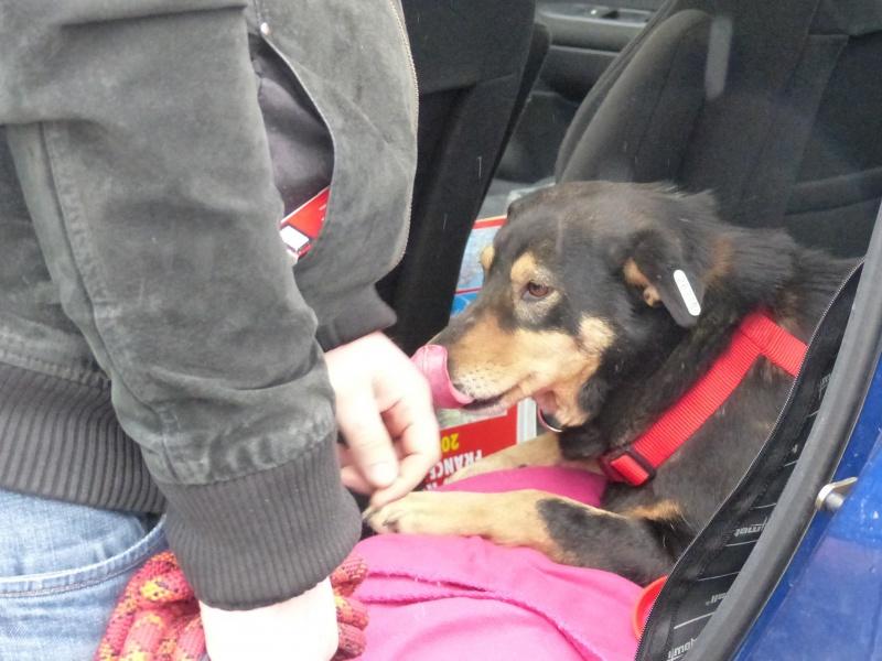 Negrutza, un amour de chienne, 2 ans environ - Page 2 928027P1030247