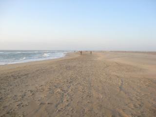 état de la plage de l'éspi!!! 933524IMG8383