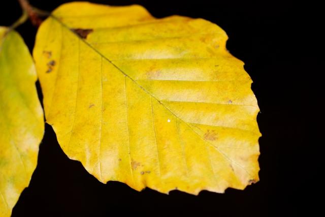 Les couleurs de l'automne 934307IMG_7563_DxO__640x480_