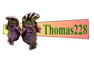Dionaea 'Miss pimbeche' 935631signature