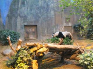 Trip Report - Hong Kong Disneyland HKD Chine Macau Hong Kong Ocean Park - Aout Septembre 2013 938058IMG3260