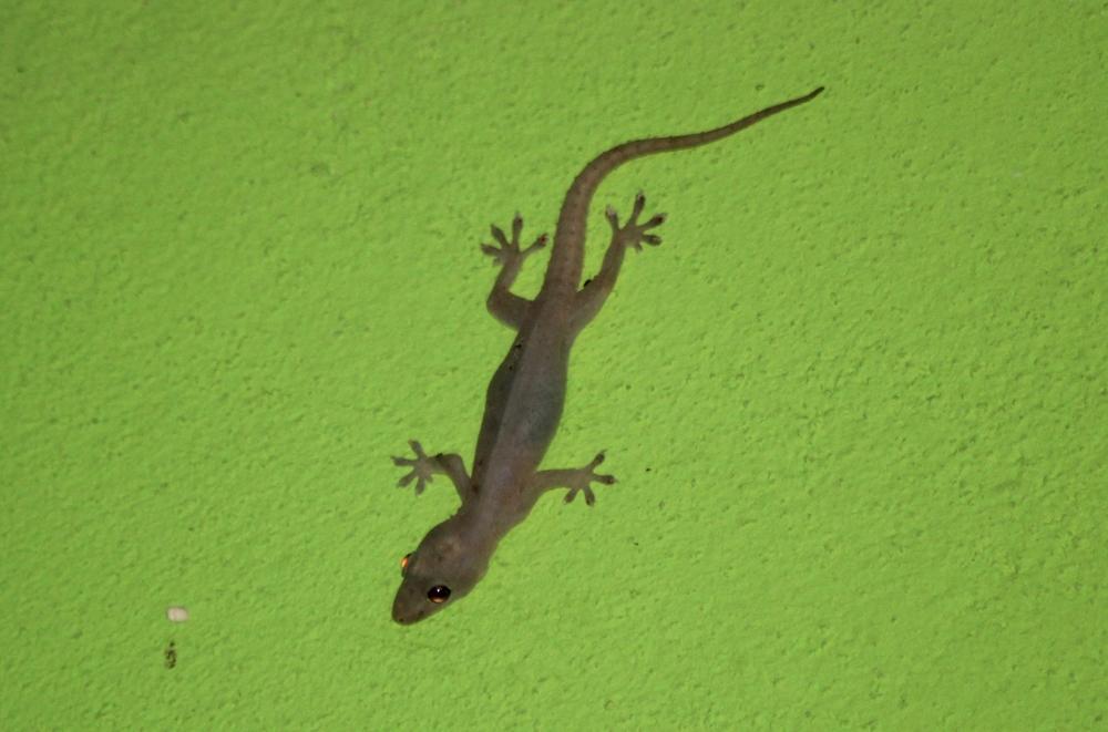15 jours dans la jungle du Costa Rica 938092hemi1r