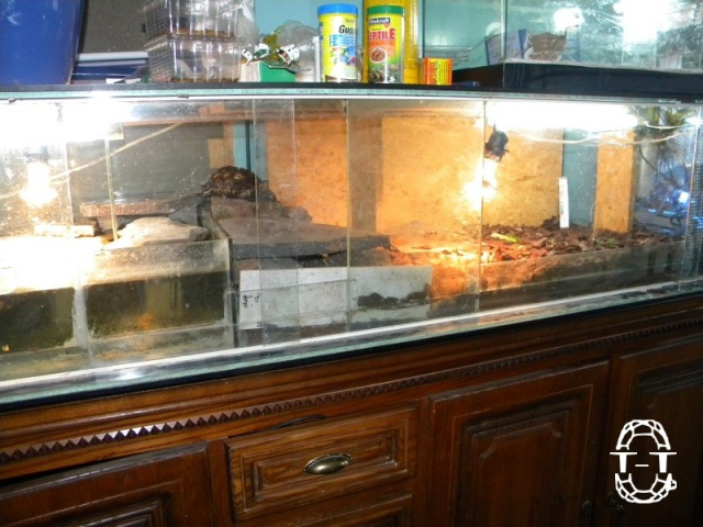 Regroupement des photos d'aquaterrariums espèces palustres 943898kinao