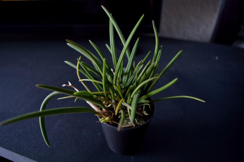 L'orchidarium de Kiwano 958036DSC0269
