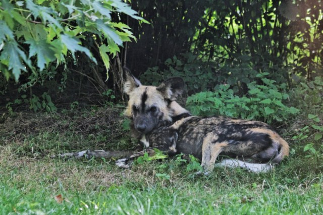 Zoo du Pal (Allier: Dompierre sur Besbre) 963132IMG_6383_DxO__640x480_