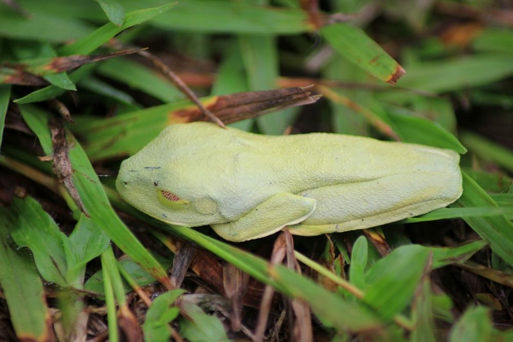 15 jours dans la jungle du Costa Rica 965884aga1r