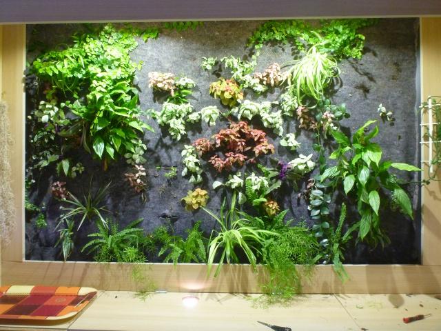 Le nouveau mur végétal de Olivetzou (projet fini à 98%) enfin les leds - Page 4 965940P1010793
