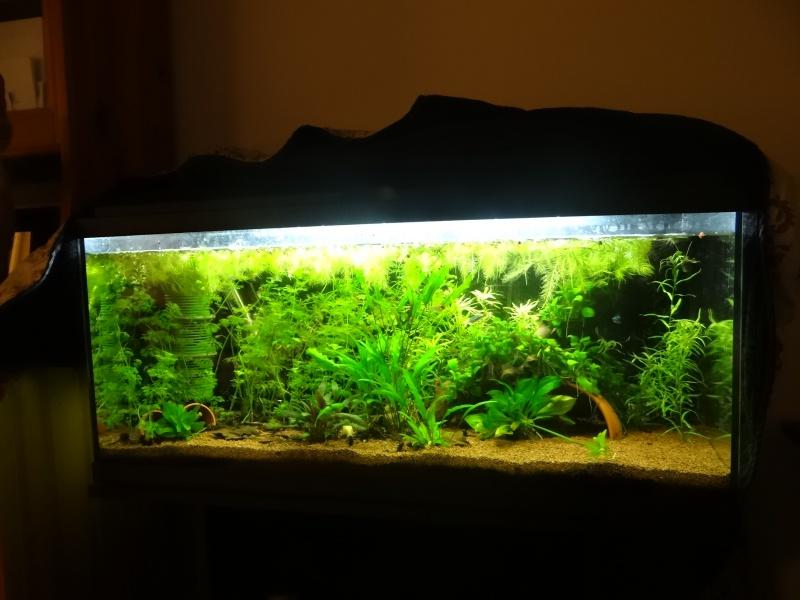 Ma Fish'étagère et les autres  967105DSC06540