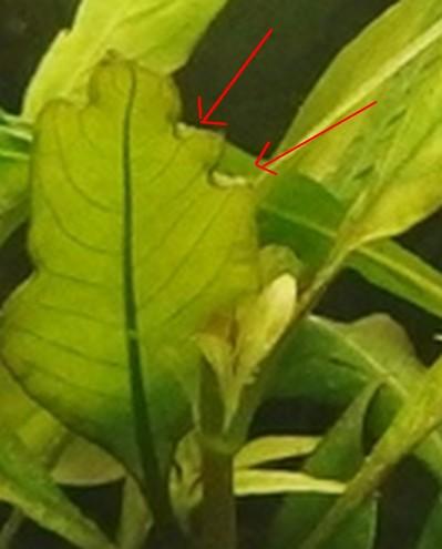 120 L - Tendance Amérique du Sud [help]Problème d'algues 967579Sanstitre2