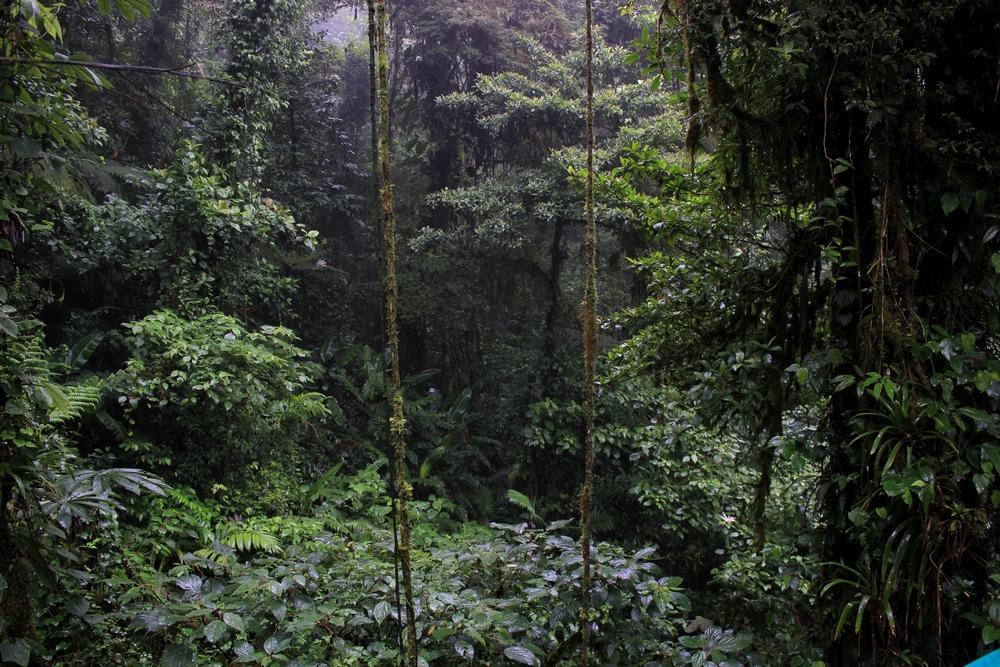15 jours dans la jungle du Costa Rica - Page 2 982321monte4