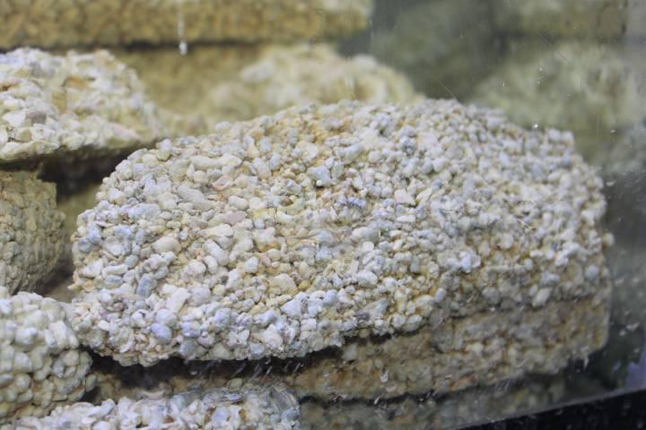 réalisation de pierres artificielle pour récifale 984580PXR_IMG_0028