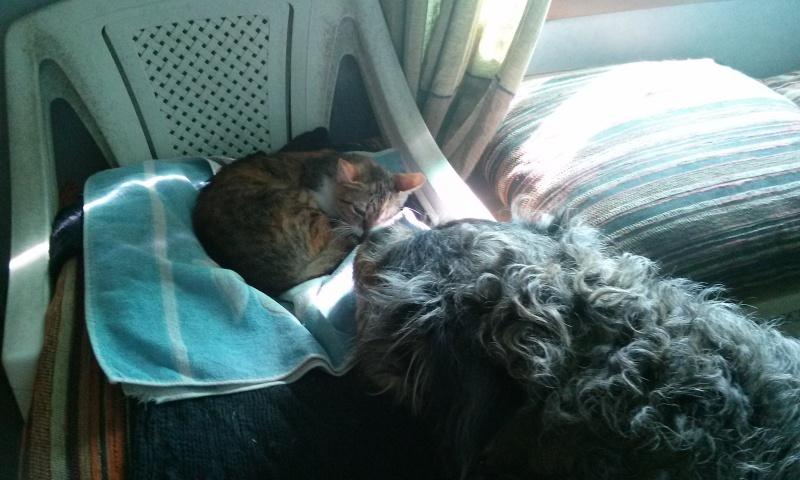 DUCHESSE - chatte femelle, née 2011/2012, borgne - (PASCANI) - adoptée par Chantal Pascal (dpt 63) - Page 3 9848822419