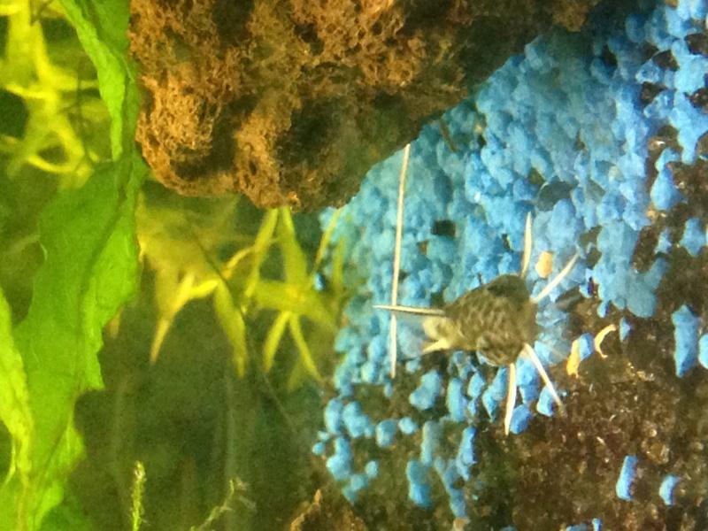 Identification d'un poisson 985969IMG1397