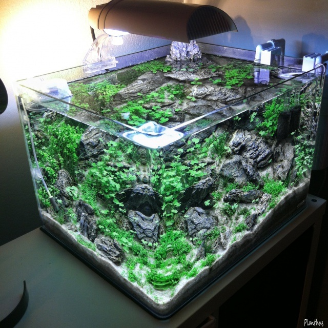 "Scaper's tank 50 L ""MountainScape"" - Page 2 988995top24"