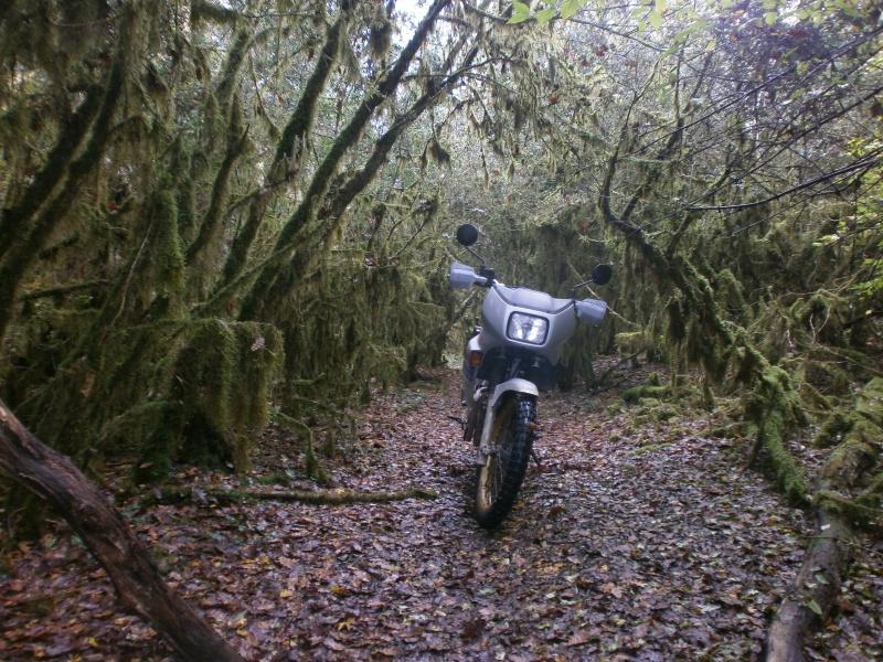 Promenade dans les bois 990784PA270003