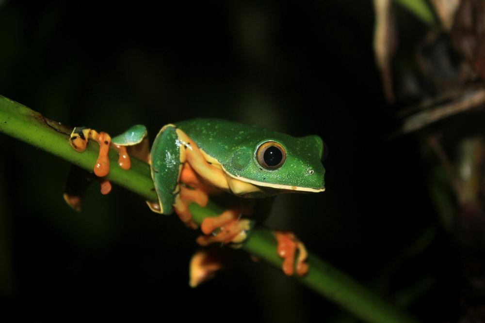 15 jours dans la jungle du Costa Rica - Page 2 991667calca2r