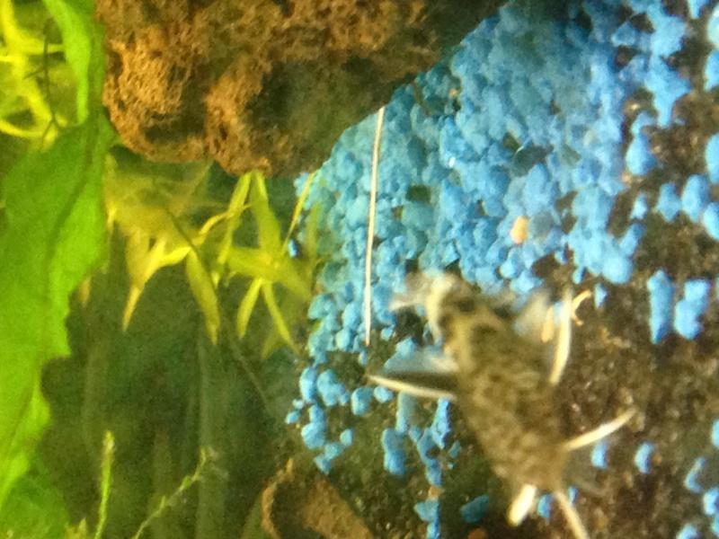 Identification d'un poisson 993943IMG1398