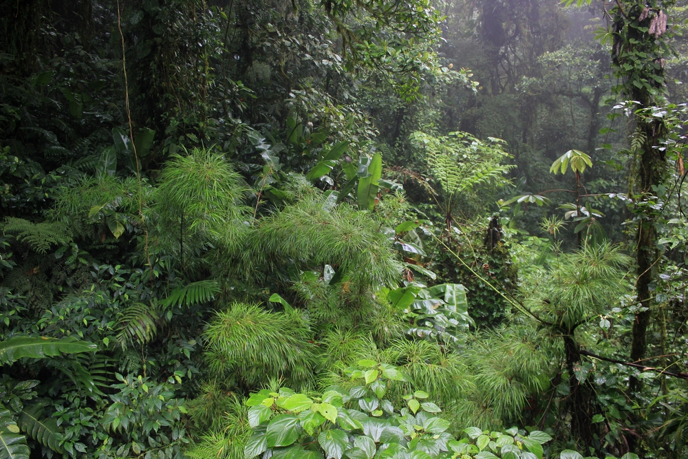 15 jours dans la jungle du Costa Rica - Page 2 994584monte3