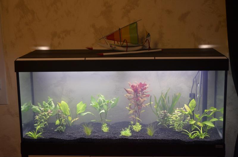 les 1er pas de mon aquarium  de 240 l 995901DSC0250