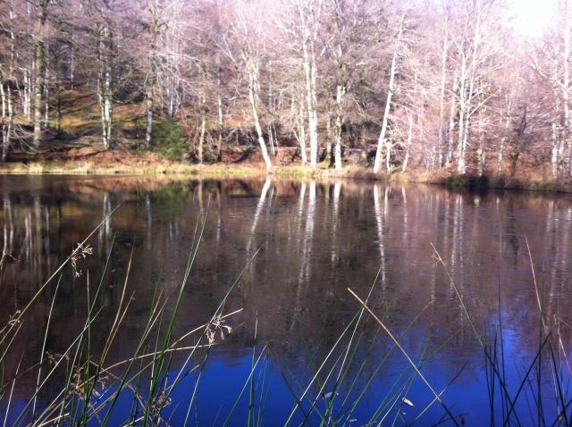 """Sortie """"tranquille"""" 12 décembre,Montagne Noire 996903Lacpicnick2"""
