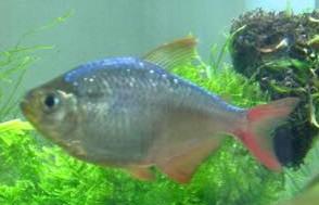 3 poissons à identifier Mini_118665Sanstitre8