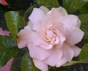Mon petit jardin secret :D - Page 2 Mini_146491IMAG0239
