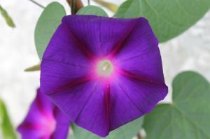 Floraisons du mois de juillet - Page 12 Mini_163670IMG3310