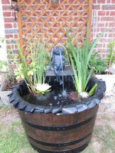 grenouille et petit bassin  Mini_178561IMG4734