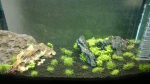 Aquarium 60L aquascape. Mini_287660WP20140205001