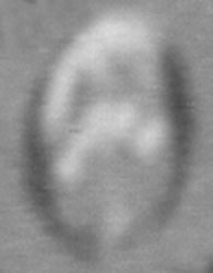 Logo Potez années 1930-1940 ? Mini_302645PotezLogotype2