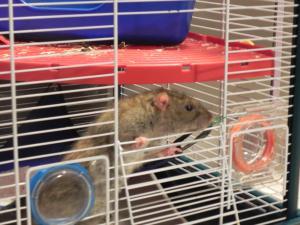 La douce retraite de Papy rat  Mini_302984DSCN7995