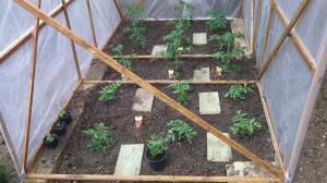 tunel pour mes tomates Mini_322042IMG20150522122544