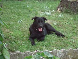 DARIK (mâle croisé labrador) - Page 2 Mini_368309DSC00528