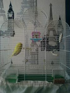 mon oiseaux saigne de l'aile que faire ? URGENT Mini_384702Photo0015
