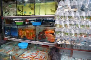 [Photos] Voyage Hong Kong - poissons Mini_465596DSC03556