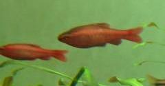 3 poissons à identifier Mini_523586Sanstitre4