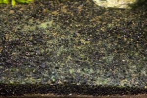 Apparition d'algues vertes Mini_540882MG8121