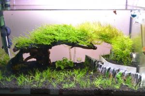 projet aquascape crevettes Mini_583163DSC0007