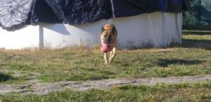 Quelles activités pour un chien moyennement âgé? - Page 2 Mini_622568DSCF5543