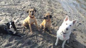 Dogwalker = le promeneur de chien Mini_630926les4